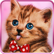 sweetcats